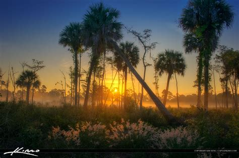 florida landscape pictures natural florida landscape foggy morning sunrise