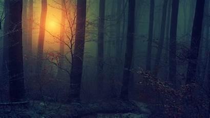 Woods Dark Wallpapers Backgrounds Pixelstalk