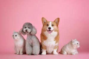 wohnungssuche mit hund wohnungsbewerbung i ᐅ wohnungsbesichtigung die besten tipps und tricks vom profi