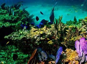 Coral Reef Florida Keys National Marine Sanctuary
