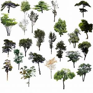 Download Adobe Material Tree Psd Trees Illustrator Clipart ...