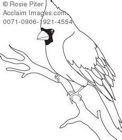 bird outline  bird outline bird outline bird drawings