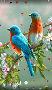 Love Birds Live Wallpaper - Android Apps on Google Play
