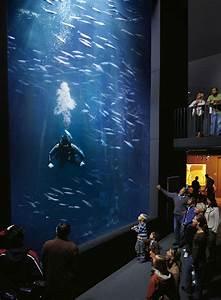 Süßwasserfische Fürs Aquarium : veranstaltungen m ritzeum veranstaltungen termine shows ~ Lizthompson.info Haus und Dekorationen