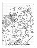 Larkspur July Coloring Pdf Colorwithsteph sketch template