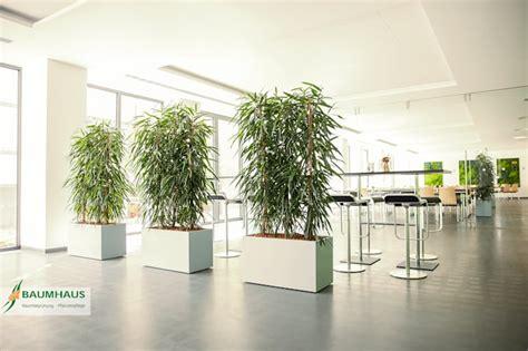 pflanzen als raumteiler raumteiler ideen f 252 r s wohnzimmer
