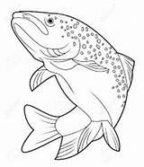 Trout Drawing Outline Jumping Rainbow Drawings Getdrawings sketch template