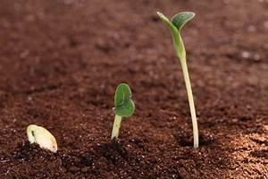 Quand Planter Courgette : le jardin des chevrieres le temps des semis de printemps ~ Dallasstarsshop.com Idées de Décoration