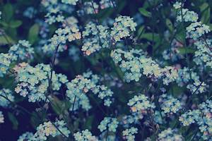 eletragesi: Blue Flowers Tumblr Background Images