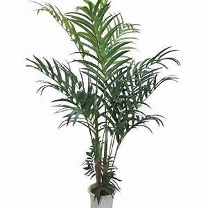 Plante D Intérieur Haute : plante verte d appartement ~ Premium-room.com Idées de Décoration