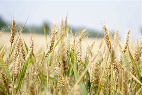 agricultural commodities learn   trade