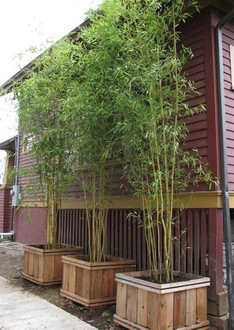 How To Make An Outdoor Bamboo Privacy Screen Woodworking