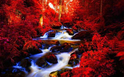 hd red autumn forest stream wallpaper