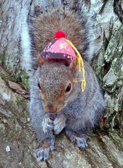 pet squirrel animals