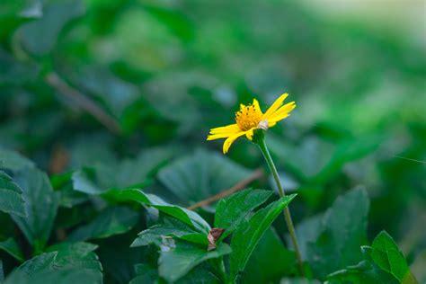 yellow flower, Landscape Wallpapers HD / Desktop and ...