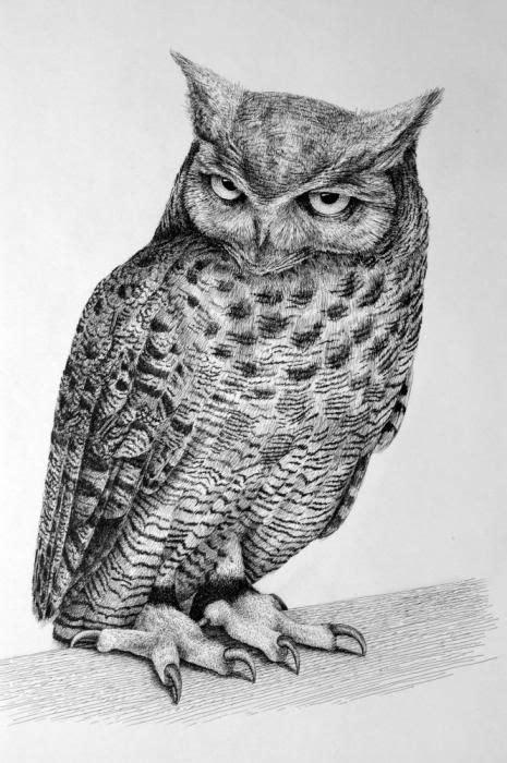 owl drawings art  owls detailed descriptions