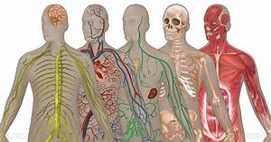 Human Body Systems By Definition Quiz