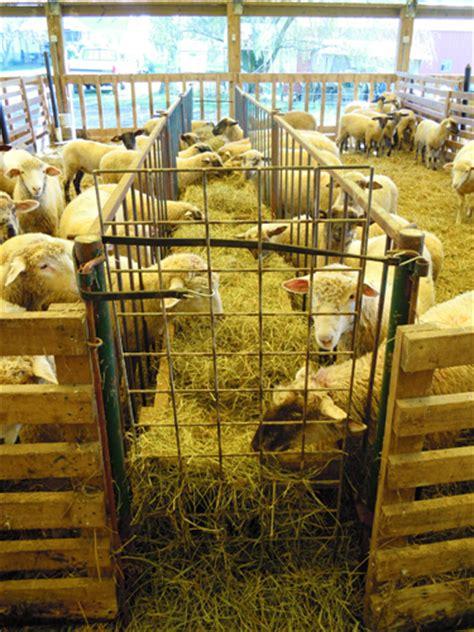 shed for sheep shed lambing premier1supplies sheep guide