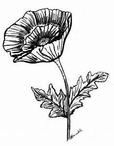 Black And White Poppy Painting by Nancy Rucker - Black And ...