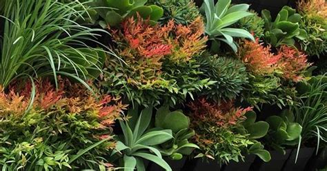 Best Plants For Vertical Gardens by 10 Best Plants For Vertical Gardens Homelife