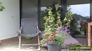 Dahlien Wann Pflanzen : wann lavendel pflanzen lavendel wann pflanzen wie pflegen liebenswert lavendel pflanzen tipps ~ Frokenaadalensverden.com Haus und Dekorationen