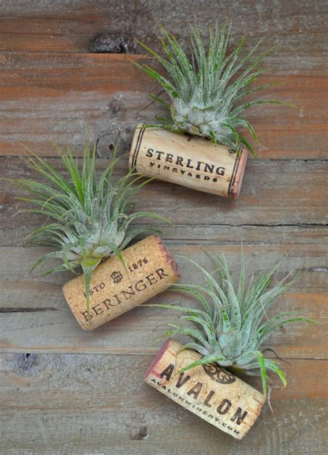 awesome diy air plant displays hangers  holders