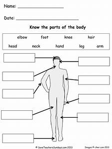 Parts Of The Body Lesson Plan And Worksheets