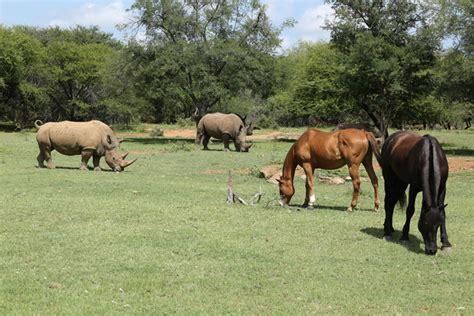 horses horse ant rhino collection safari standard
