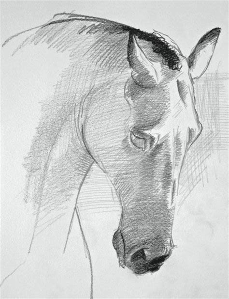 drawing horses draw  horses face   steps drawing
