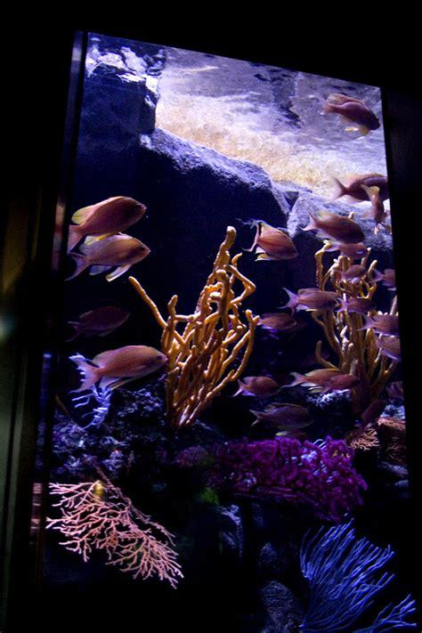 parc loisirs cin 233 aqua aquarium trocadero bassin anthias gorgones 233 ponges oursins crayons