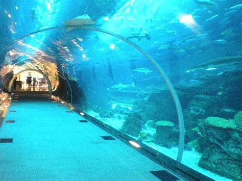 aquarium hotel in dubai dubai aquarium and underwater zoo travel tips for around the world