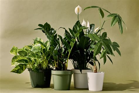 The 10 Best Indoor Plants For Every Kind Of Person • Gear