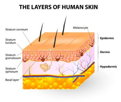 Understand How The Skin Layers Work For Repair. People With No Health Insurance. Oil Filter Wrench Size Chart. Asset Preservation Advisors Solar Energy Nyc. O Hare International Airport Chicago Il. Small Business Loans In Louisiana. Stated Value Auto Insurance Website For Cpa. Free Quotes On Auto Insurance. Global Sourcing Solutions Medicare Chair Lift
