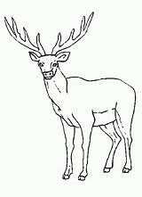 Rocky Coloring Elk Mountain Drawing Clipart Printable Popular Library sketch template