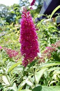 Pflanzen Für Trockene Schattige Standorte : stauden f r sonnige standorte stauden f r sonnige ~ Michelbontemps.com Haus und Dekorationen