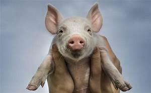 Vermieter Verkauft Haus Muss Ich Ausziehen : vermieter muss hausschwein dulden advopedia ~ Lizthompson.info Haus und Dekorationen