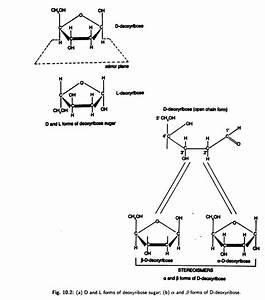 Dna  Structure  Forms And Functions  With Diagram