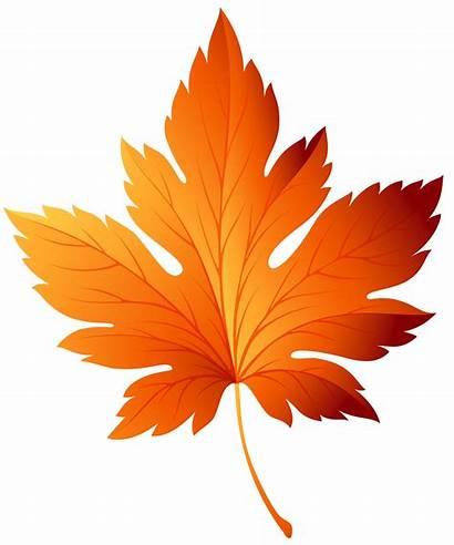 Leaf Autumn Clipart Clip Transparent Clipground Cliparts
