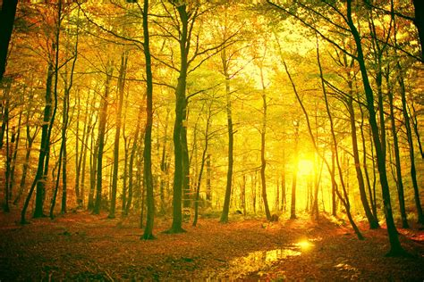 forest, Landscape Wallpapers HD / Desktop and Mobile ...