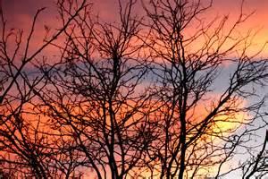 trees topbeautifulplaces