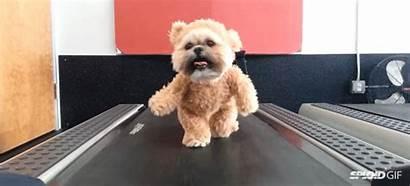 Bear Costume Teddy Puppy Animal Funny Walking