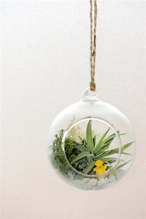 air plant glass hanging vase terrarium