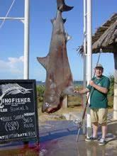 Big Fishes of the World: SHARK BULL (Carcharinus leucas)