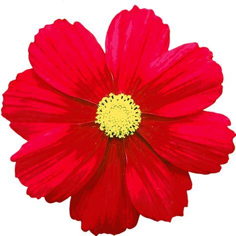 ดอก ดอกไม้ สี · ภาพฟรีบน Pixabay