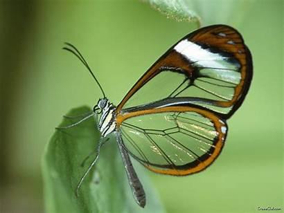 Butterfly Wallpapers Butterflies Moths
