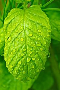 Water, Drops, On, The, Leaf, Free, Stock, Photo