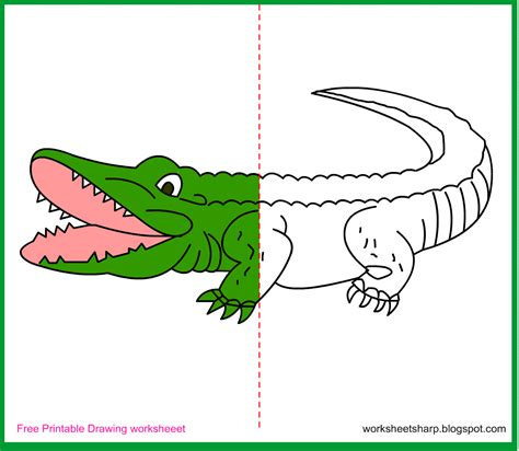 free drawing worksheets printable alligator drawing