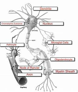 The Neuron Labeled Neuron Boxed Ans