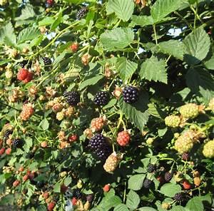 Blackberry And Raspberry Budgets  U0026 Pricing