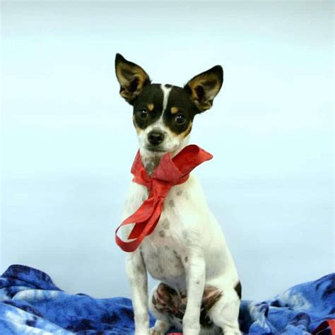 home humane society colorado animal shelter finds homes for all of its dogs